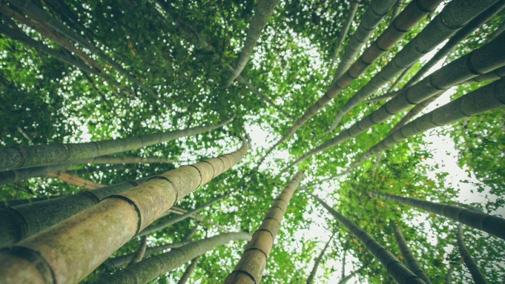 生活の中に「bamboo roll(バンブーロール)」を取り入れる5つのメリット
